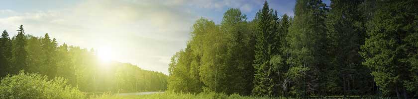 3M-Sustainability-tree-nature
