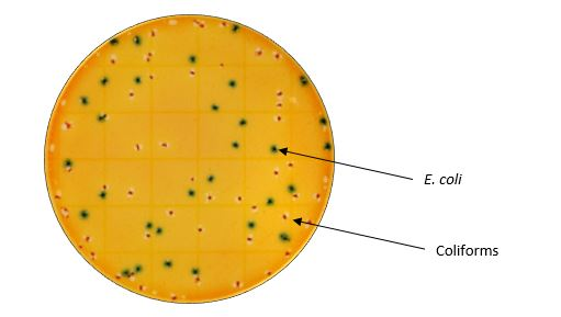 Petrifilm-3M-Rapid-E.coli-coliform-Count-Rapid-Plate-Food-Safety-Testing