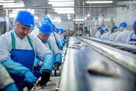 Food processing surface for environmental monitoring testing